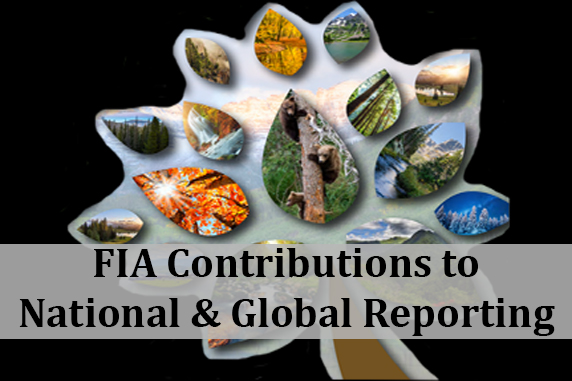 FIA Contribution to National & Global Reporting